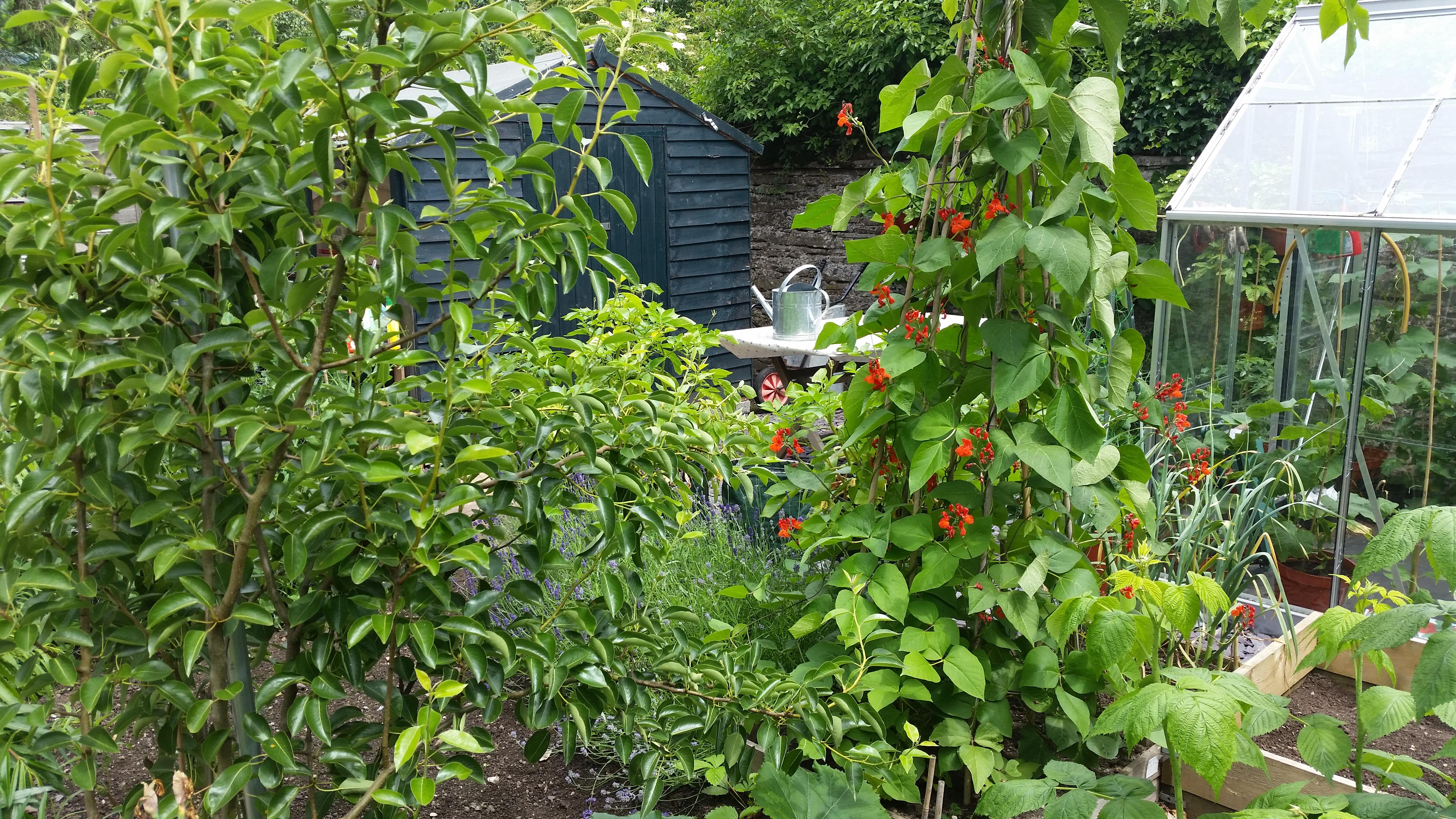 garden 2016 32 june.jpg
